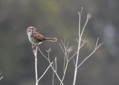 Bird perched on a delicate branch