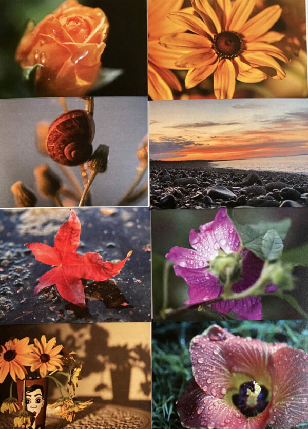 Printed notecards with photos of flowers